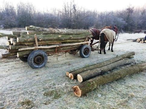 jandarmi hoti de lemne