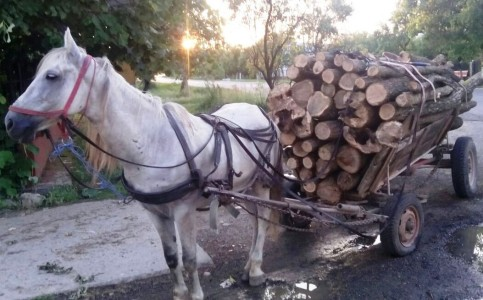 lemne jandarmi