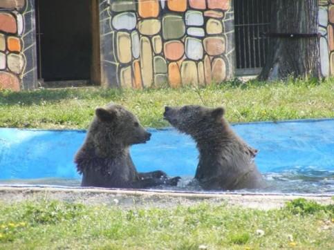 urs la zoo