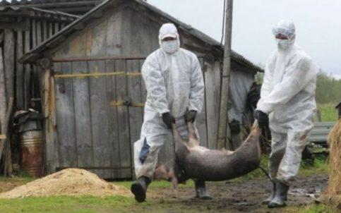Centrul  Local de Combatere a Bolilor din județul Dâmbovița s-a întrunit astăzi, 17.06.2020, ora  15.00,  ca urmare a confirmării virusului de pestă porcină africană în două gospodării din județ precum și pe raza unui fond de vânătoare, după cum urmează: